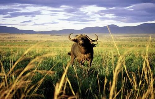 4 Days Kidepo Valley National Park Excursion